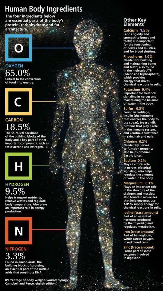 star body ingredients